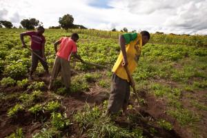 Kibidula Farm
